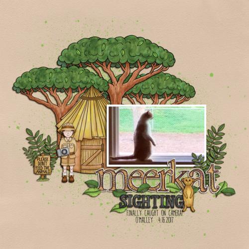 Meerkat Sighting