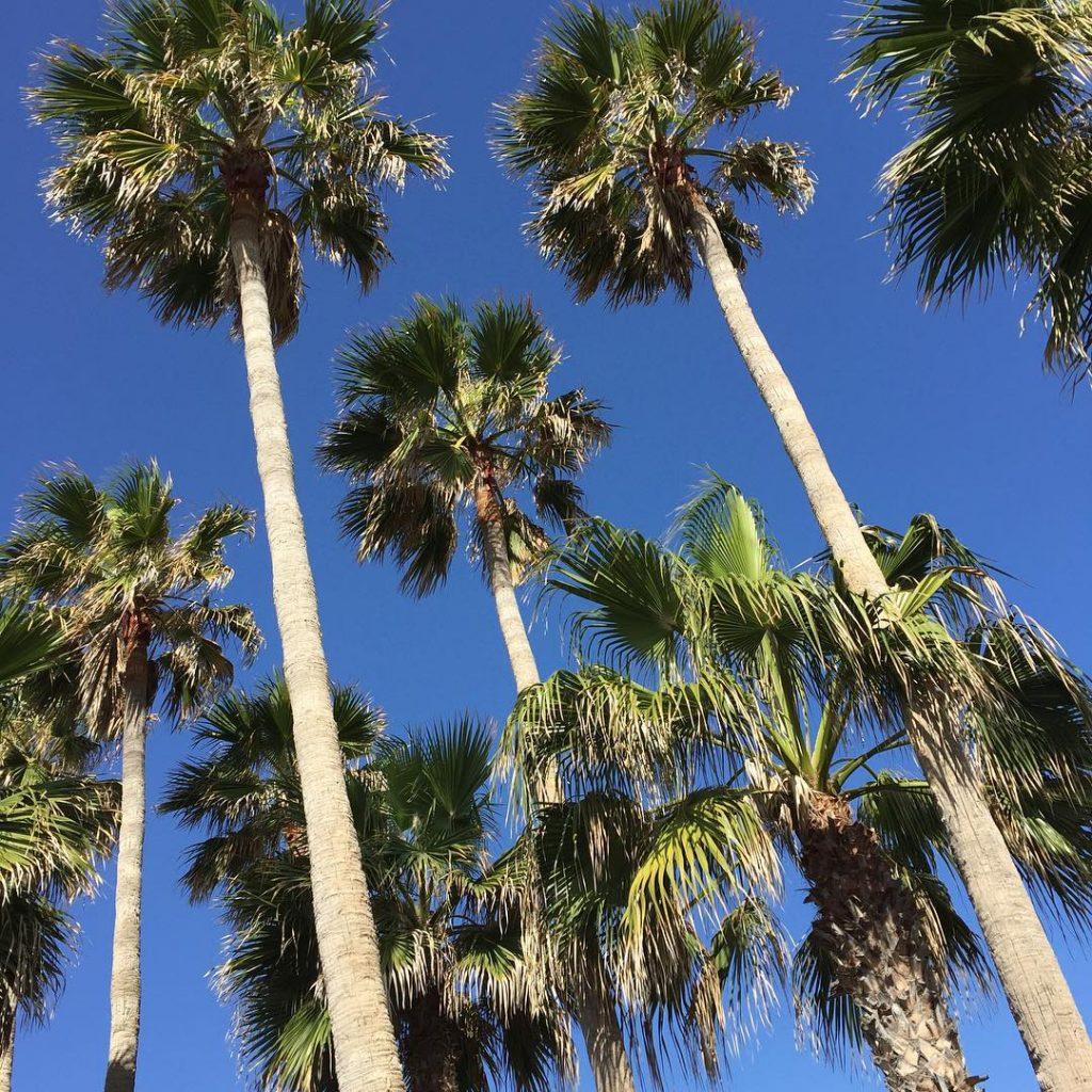 Blue skies again christmasinthesun fuerteventura icouldgetusedtothis palmtrees blueskies Continue readinghellip